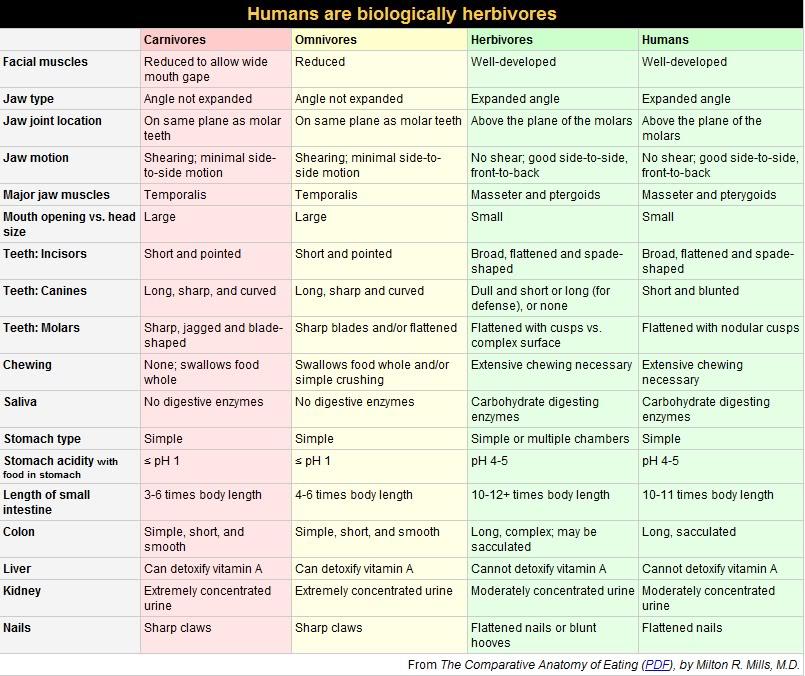 comparative-anatomy